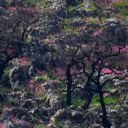 Wild flowers of Mani
